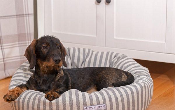 Hoe kies je de juiste hondenmand voor in huis?
